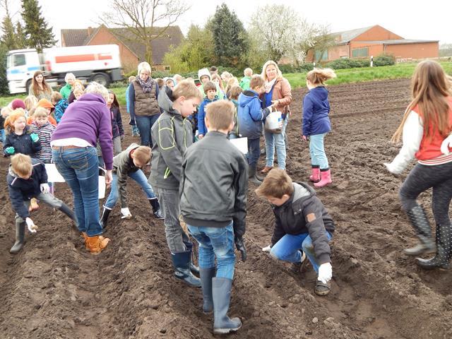 Grundschule Walchum Kartoffelpflanzaktion 02 (Copy)