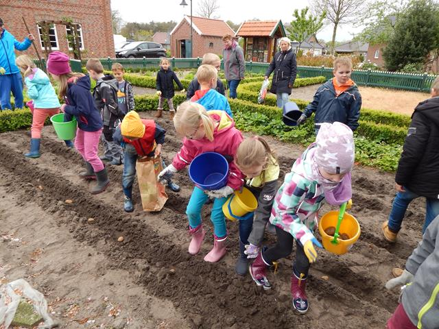 Kartoffelpflanzaktion Grundschule Walchum 01 (Copy)